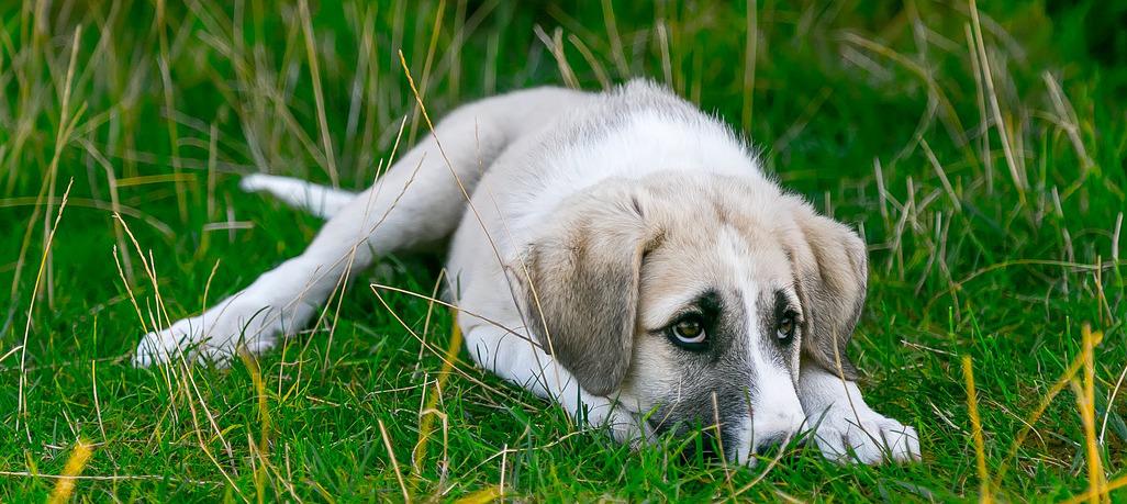 Hundetoilette kaufen Top 5