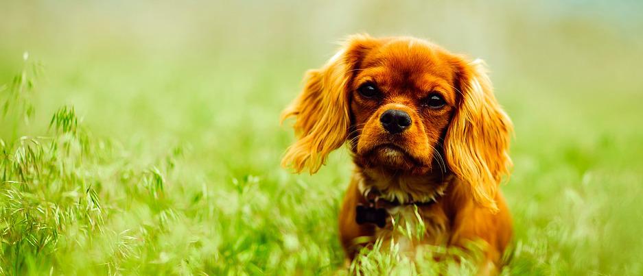 Ihrem Hunde zu Liebe