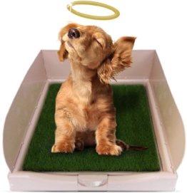 DOG KATZENKLO DER RASCAL DOG COMPANY KATZENKLO. WIE AUF DEN DRAGON'S GESEHEN -
