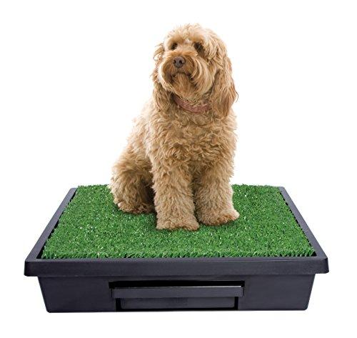 Vorteile vom Hundeklo