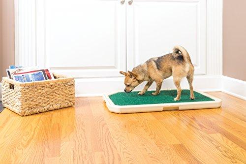 Hundetoilette für Zuhause